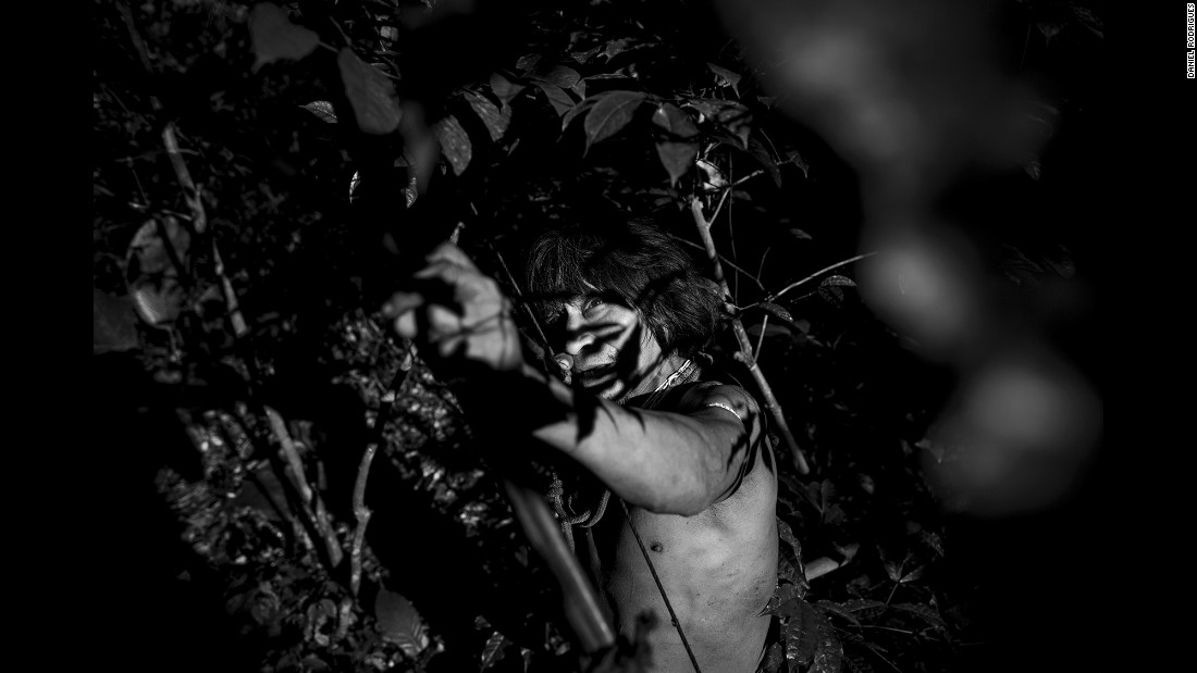 Muturuhum, a member of the Awa-Guaja tribe, uses a bow and arrow to hunt in the Amazon rainforest. Portuguese photographer Daniel Rodrigues spent time with the endangered tribe last year.