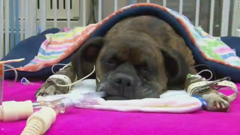 dnt oh hero dog fighting for life_00003012