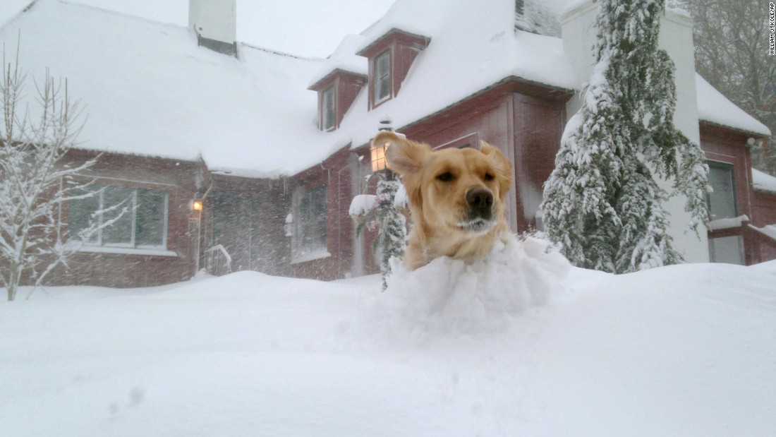 A dog romps through heavy snow in Bourne, Massachusetts, on February 15.