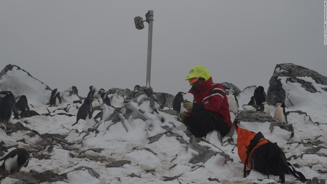 "Hart servicing one of the cameras in the field. ""We've been out in the field and now we're coming back to go through all these data (taking) it from raw data to process,"" he says. ""The whole point of this is we're learning fundamental things about penguins but the whole point is to turn this into something that can inform policy."""