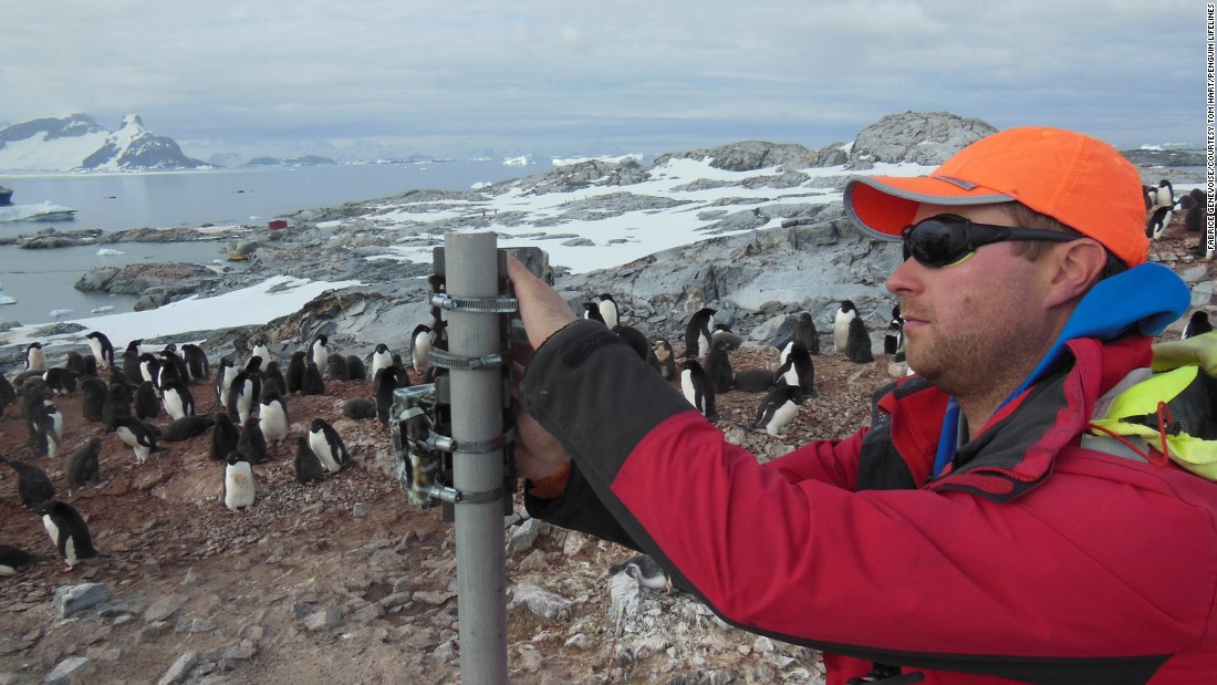 The project was set up by Tom Hart, a researcher in the University of Oxford Department of Zoology. It has international collaborators including the Woods Hole Oceanographic Institute and researchers from the Australian Antarctic Division. Hart is shown here changing camera angles on Petermann Island, Antarctic Peninsula.