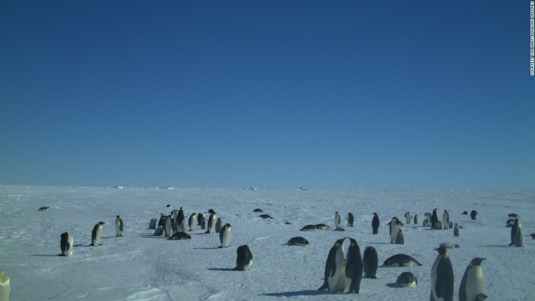 For the last five years, Hart and his team of three have headed south for the winter months to collect more data. Hitching rides from tourist boats and the odd chartered yacht to reach more remote locations, the team have been able to canvas an incredible amount of the Antarctic region. Here, cameras capture emperor penguins at Gould Bay, Weddell Sea.