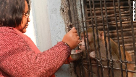 Shabista Srivastava, Shabista feeds her pet monkey Chunmun at her home in northern India's Uttar Pradesh state on Monday.  Shabista and her husband made Chunmun their sole heir.