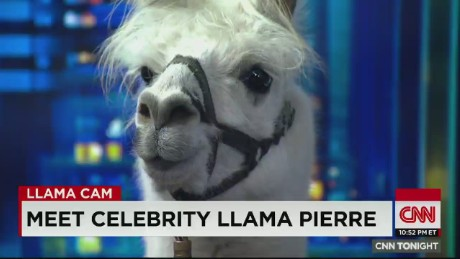 cnn tonight pierre the llama live with don lemon _00005319
