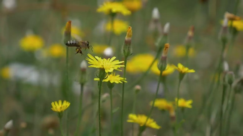 orig inside man morgan spurlock bees_00003927.jpg