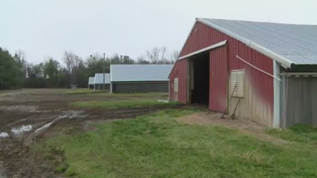 pkg chickens killed clarendon county_00000526