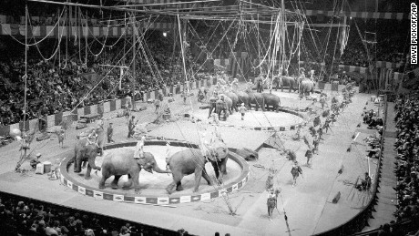 Elephants in Ringling Bros. circus