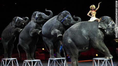 The elephants will be moved to the Ringling Bros. Center for Elephant Conservation in Florida.
