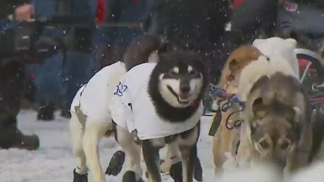 The start of the Iditarod was missing one key element