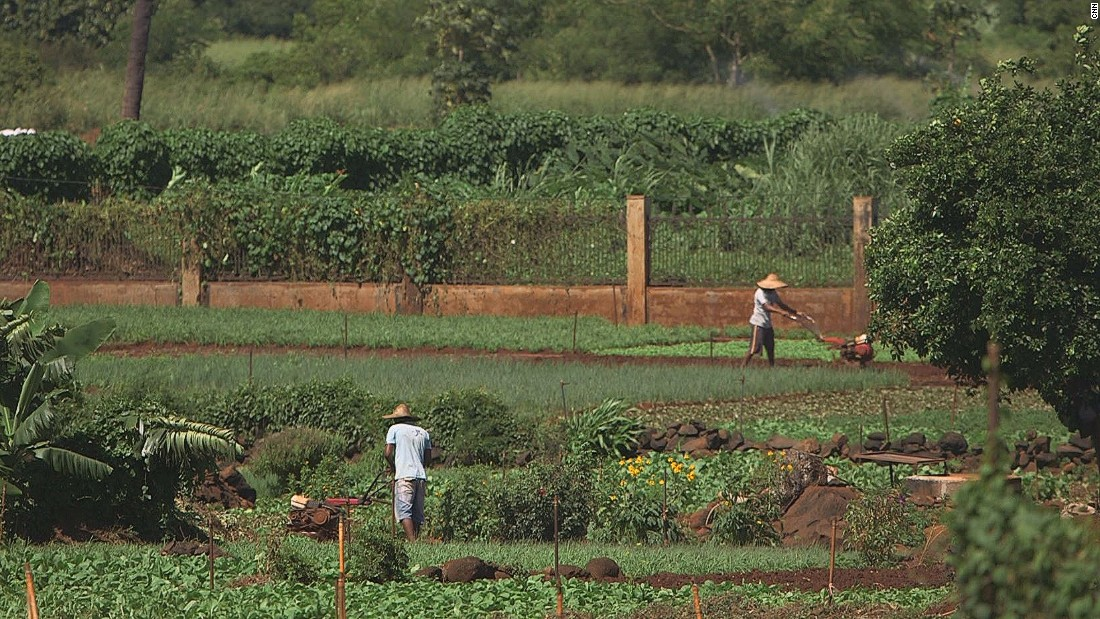 The island country also has a reputation as a great place to do business. SKC Surat, the country's fresh fruit and veg market leader, started off on this small plot of land next to the Surat family home.