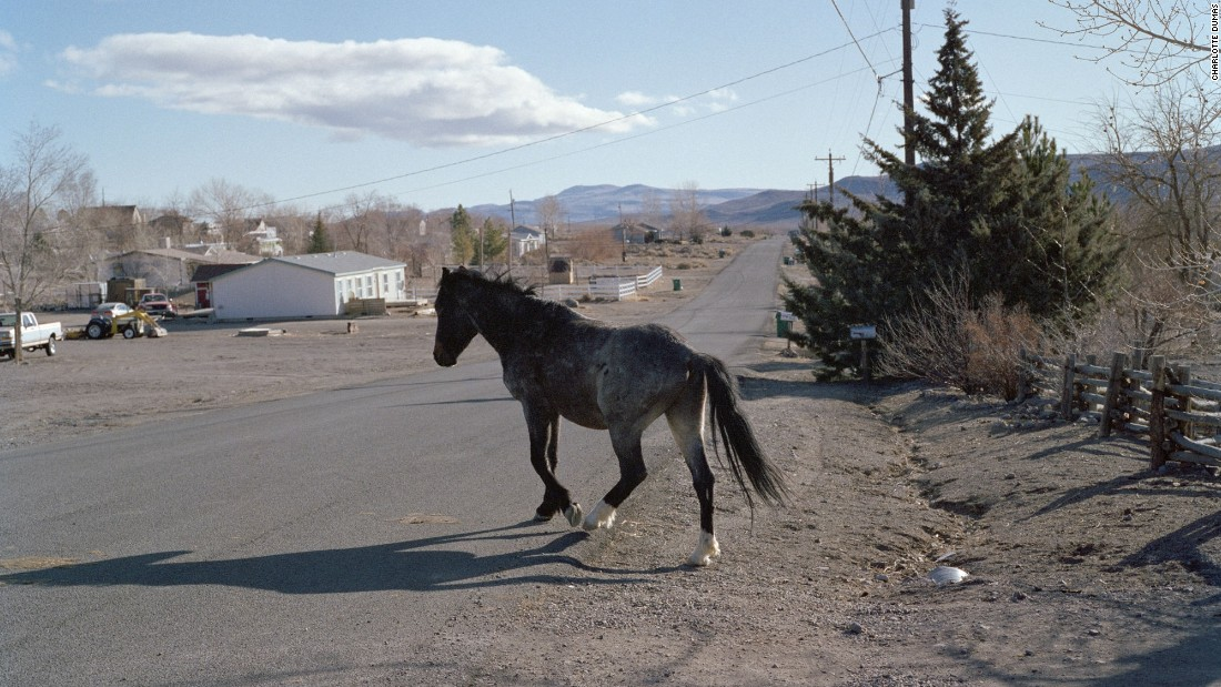 A feral horse crosses the road in Dayton, Nevada. The wild horse population has exceeded its safety limit by 22,500, according to the Bureau of Land Management.
