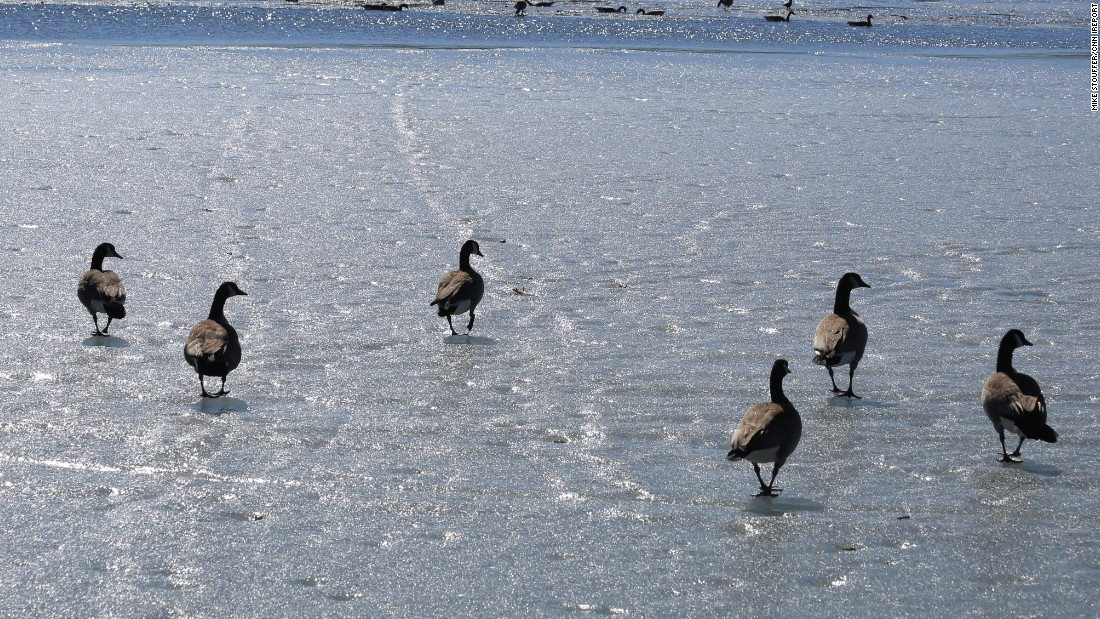"Geese are <a href=""http://ireport.cnn.com/docs/DOC-1226088"">ready for spring</a> in Wausaw, Wisconsin, on March 17."