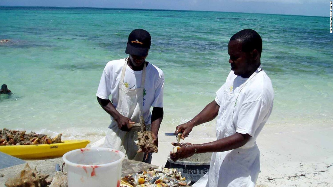 "<a href=""http://ireport.cnn.com/docs/DOC-1222445"">Erin Carlson</a> visited Turks and Caicos in 2007 for her wedding. ""One of our 'must dos' was a visit to 'da Conch Shack.' Here you can watch as they clean the conch right there on the beach, which you can then order in a dish at this little seaside bistro shack,"" wrote Carlson."