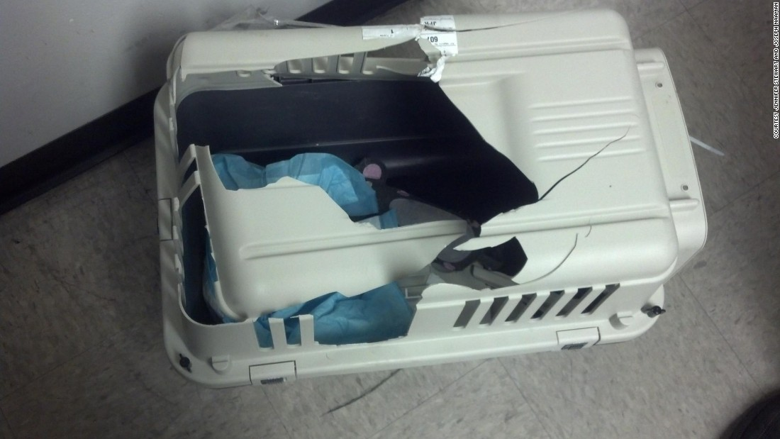 Felix escaped through a large hole in the top of the cat's carrier.