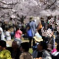 Defining Moments Hanami blossom