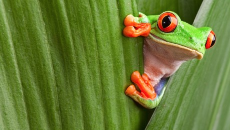 When it comes to information overload, we're like frogs in boiling water