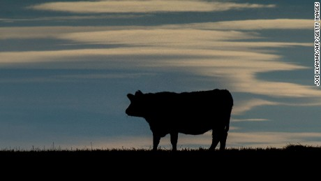 A cow is silhouetted on a pasture near the Trans-Canada Highway north of Calgary, Alberta on February 13,2015. The Canadian Food Inspection Agency (CFIA) confirmed February 13, 2015 that a case of mad cow disease has been found in Alberta, Canada .JOE KLAMAR/AFP/Getty Images)