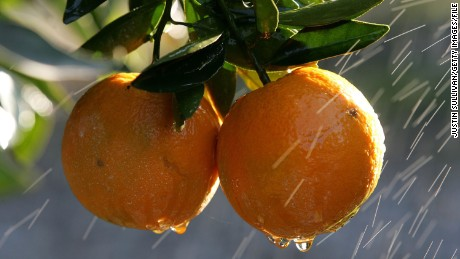 FRESNO, CA - JANUARY 16:  Oranges are sprayed with water to melt the ice frozen over them at the Keith A. Nilmeier Farms January 16, 2007 in Fresno, California. An estimated 70% of California's citrus crops have been damaged by a severe cold snap that is bringing below freezing temperatures to California's central valley and is expected to continue through Sunday.  (Photo by Justin Sullivan/Getty Images)