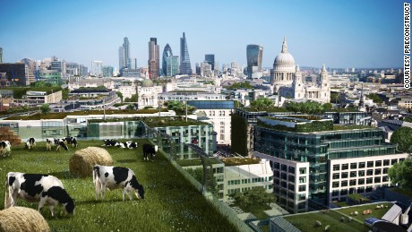 Futurologists predict cows grazing atop London's skyscrapers will become the norm in 100 years