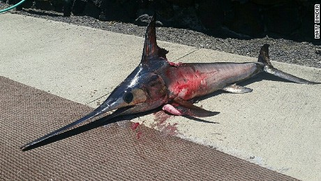 Speared swordfish kills Hawaiian fisherman