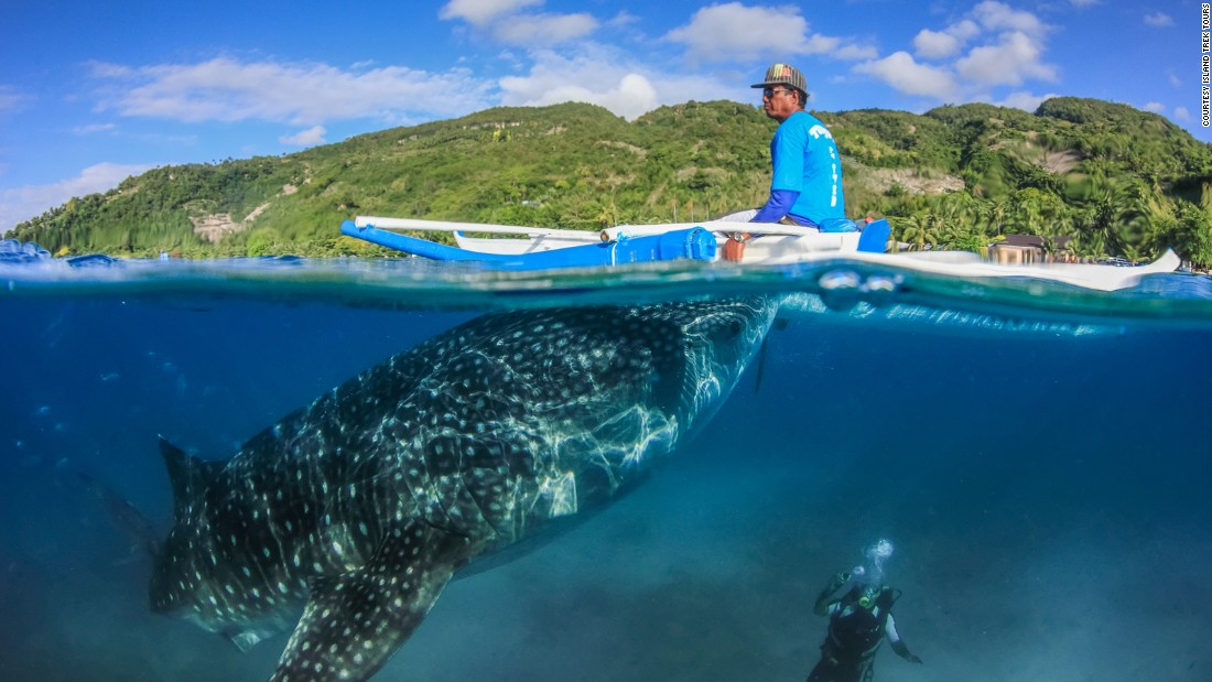 Swimming With Whale Sharks In The Philippines CNN Travel - 10 awesome aquariums where you can spend the night with sharks