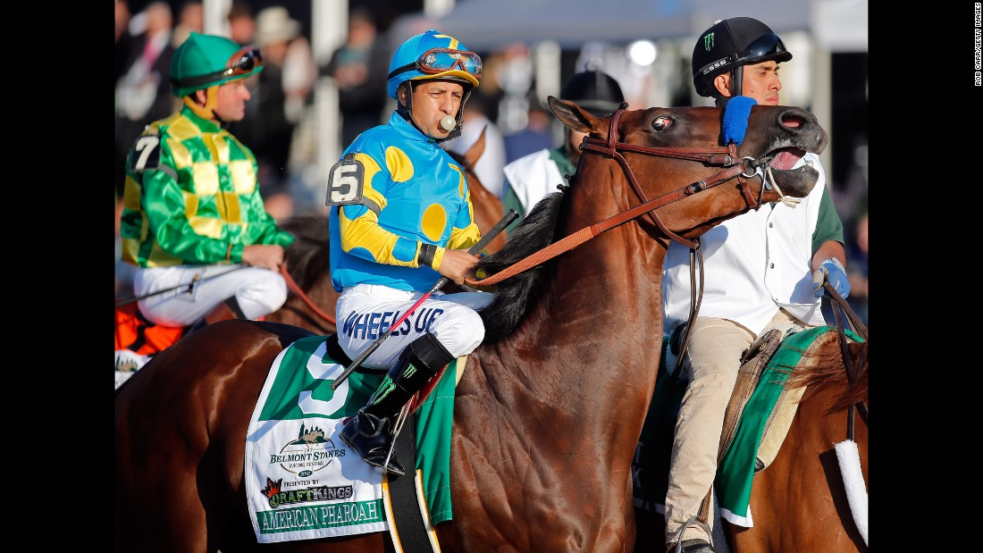 American Pharoah is led to the starting gate ahead of the race.