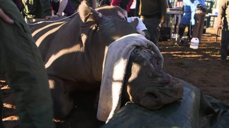 saving hope the rhino magnay pkg_00011004
