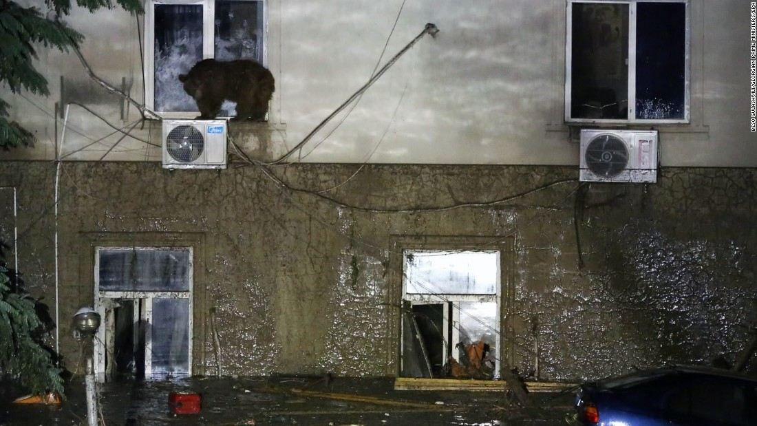 A bear perches on a window ledge on the second floor of a Tbilisi building.