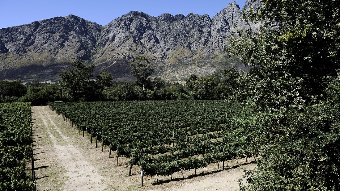 South Africa is home to around 100,000 hectares of vineyards employing 300,000 people. The industry makes up 2% of GDP.