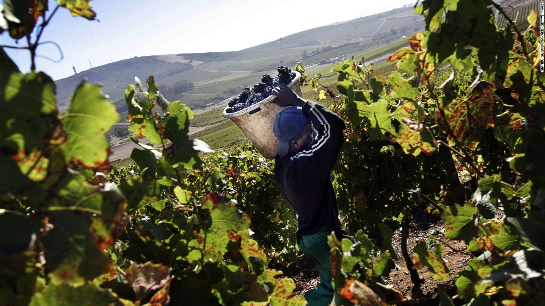 For a long time, South Africa's wines have fought hard to compete with their Old World rivals in terms of reputation globally.