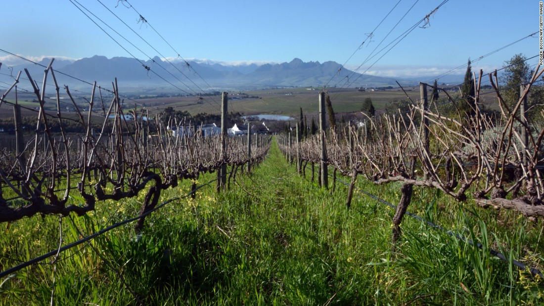 Wine was first planted here by European settlers in the 17th century. The oldest fruit-bearing vine in the Southern Hemisphere is located in Cape Town, a Crouchen Blanc planted in around 1771.