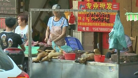 cnnee vo montero dog china festival eat controversial _00002028