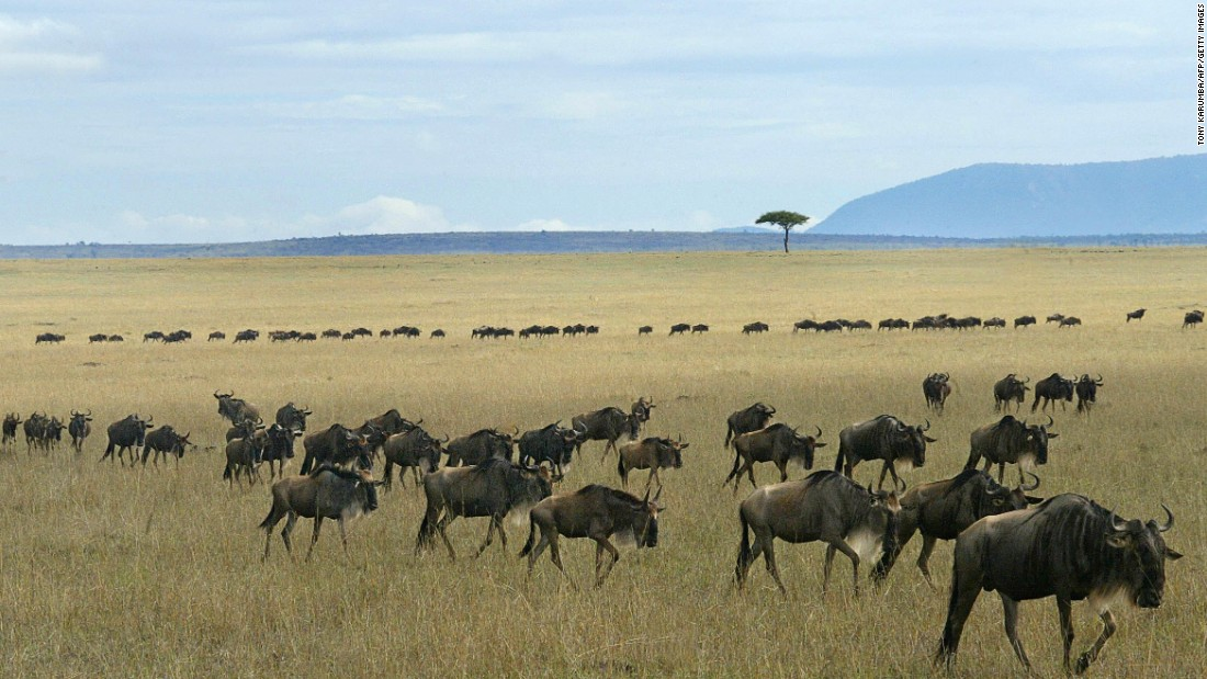 Wildlife roams freely in Kenya's Maasai Mara, drawing in swathes of safari tourists every year. This is putting a lot of pressure on the area's resources, says Stefaan Poortman, executive director of the Global Heritage Fund. <br />