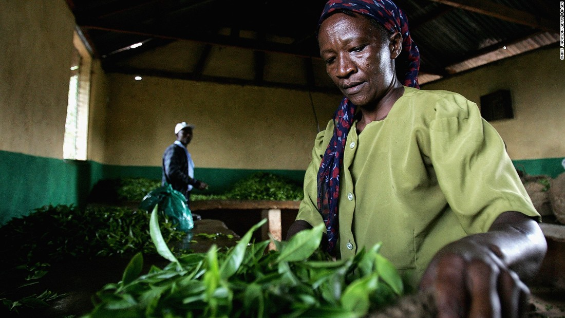 "Kenya is one of the largest tea producers in the world, trailing behind China and India. According to The Tea of Board of Kenya, exports have quadrupled in the past decade after disastrous droughts saw crops falter in 2006. Locals enjoy their tea with milk and sugar or ""strunggi"" -- black. Another popular variation is ""tangawizi,"" with additional ginger steeped with the tea leaves."