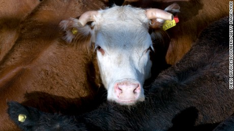Could fake meat burgers make cows obsolete?
