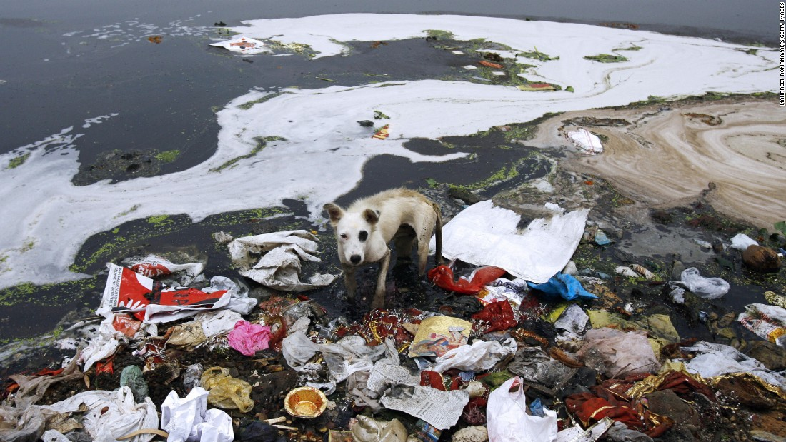 A stray dog searches for food in the polluted waters of the river Yamuna in New Delhi on June 5, 2008.