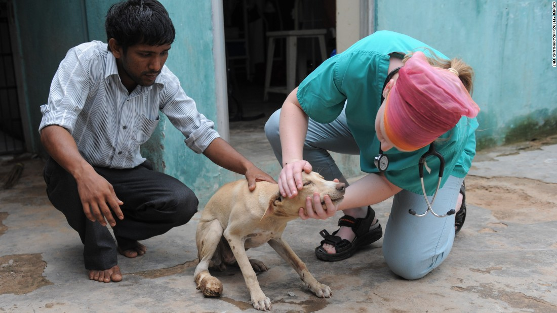 British veterinary student Kim Barrow (right) inspects an injured stray dog at The Asha Foundation -- a care center for stray animals and birds in Hathijan village, near Ahmedabad, on July 21, 2011.