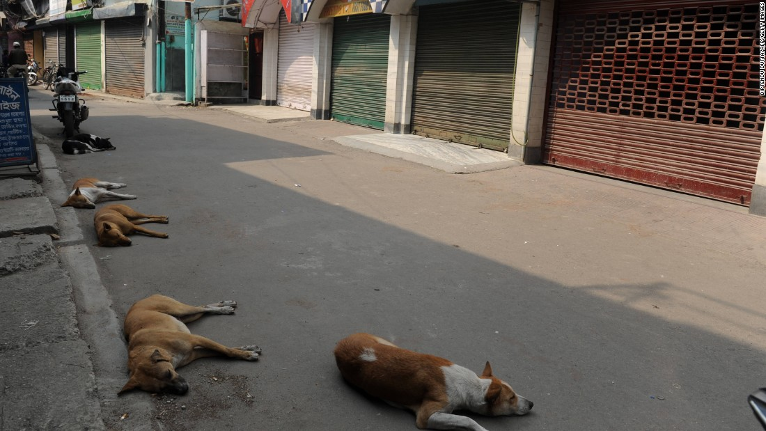 Stray dogs sleep on an empty road lined with shuttered shops during a one-day general strike called by the trade unions in Siliguri, West Bengal, on February 28, 2012.