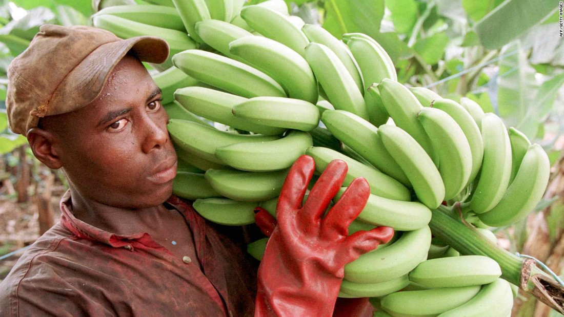 Particularly important to Africa is the East African Highland Banana (EAHB), a staple food for 80 million people. Uganda alone has about 120 varieties of this type of banana.