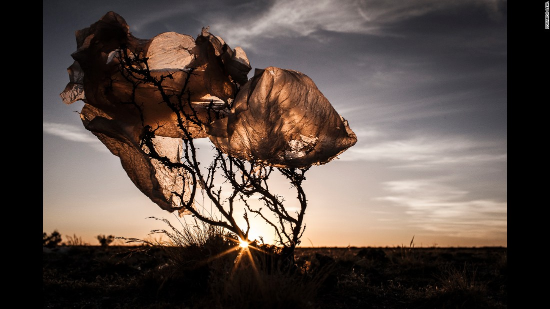 A plastic bag rests over a bush in the Bolivian Altiplano plateau. Photographer Eduardo Leal found this to be common in the region.