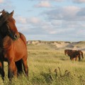 nature reserves- sable island