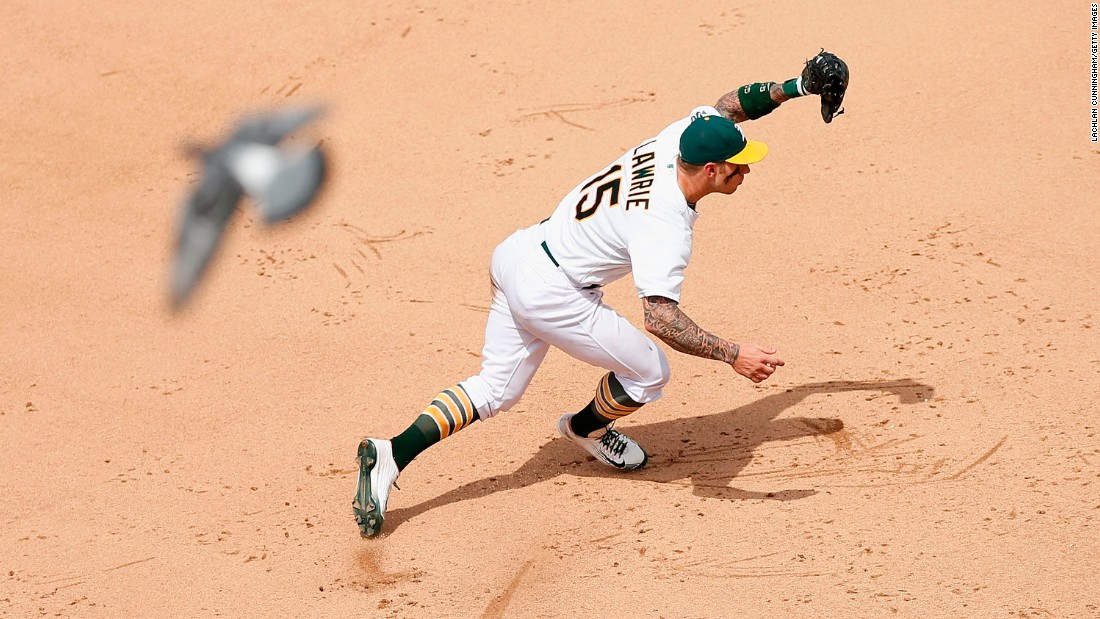A bird flies over Oakland's Brett Lawrie as Lawrie fields a ball at third base on Sunday, July 19.