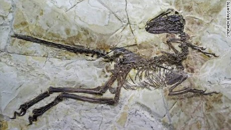 New winged dinosaur discovered in China_00003221.jpg