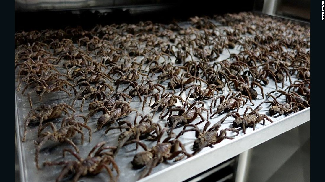 Drying tarantulas at a Thailand Unique facility.