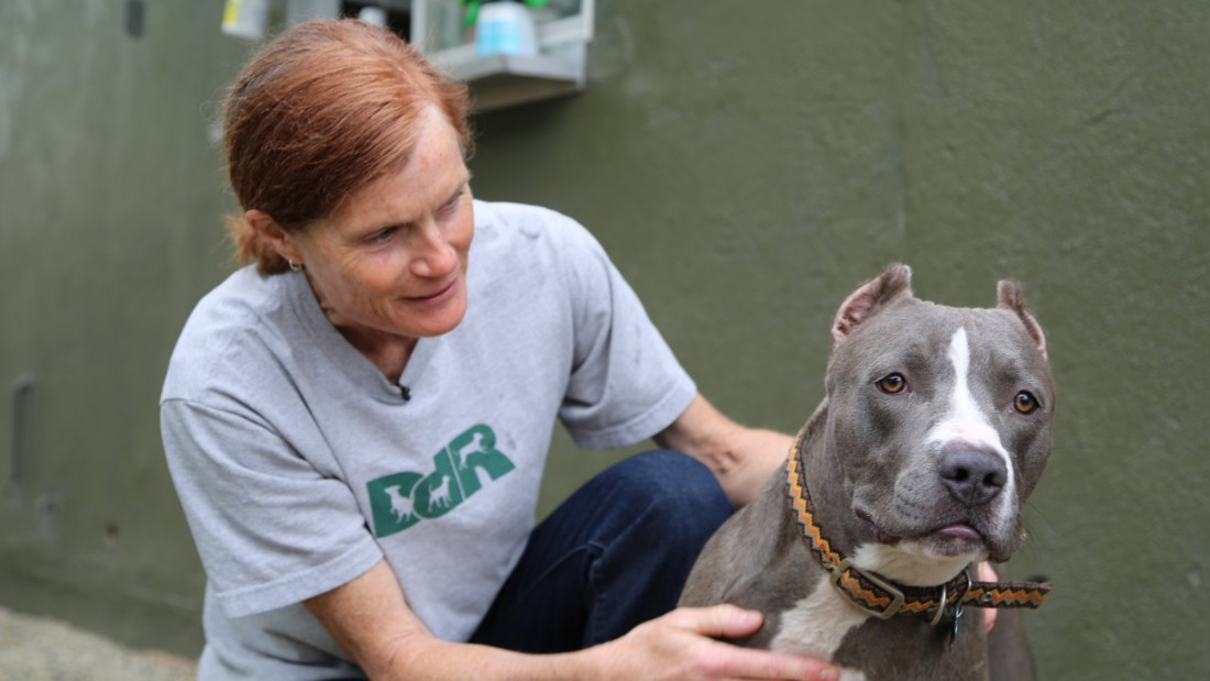 CNN Hero Lori Weise's organization tries to reach low-income families before they surrender their pets.