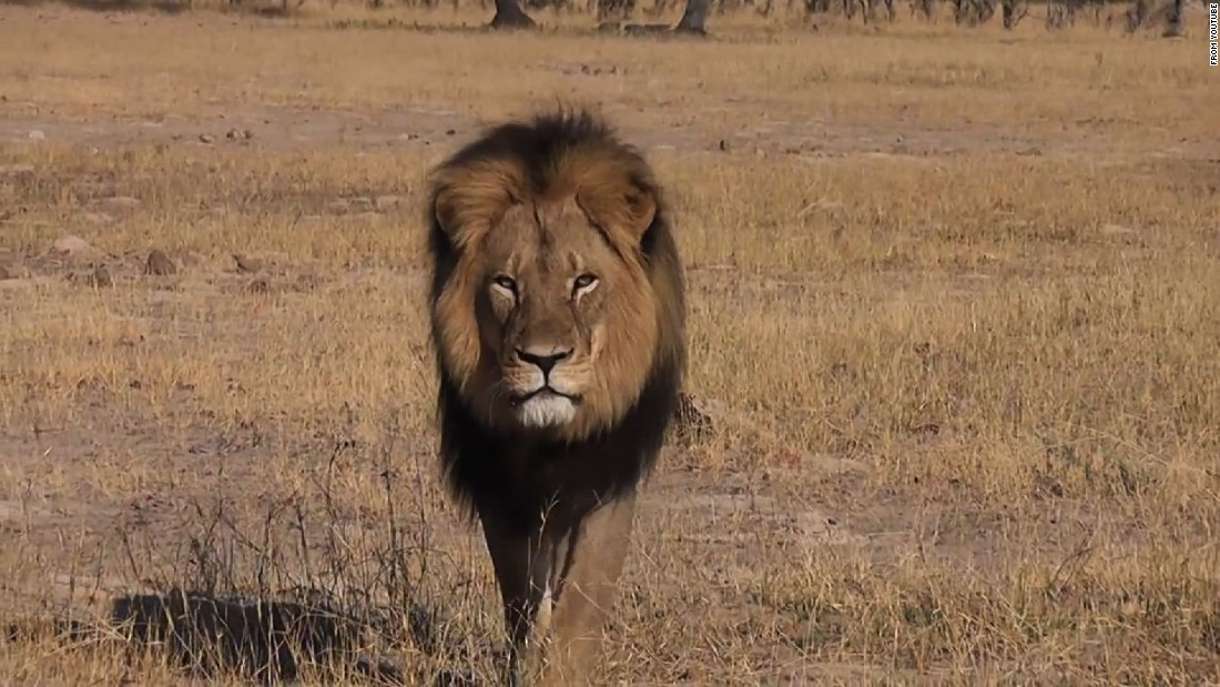 Zimbabwean officials: American man wanted in killing of Cecil the lion