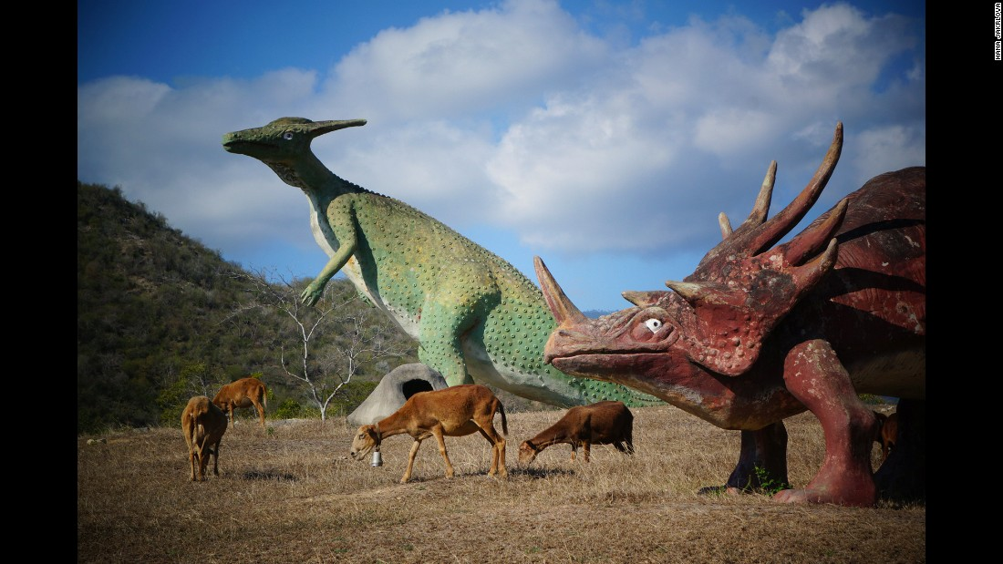 Real-life animals graze around dinosaur models.