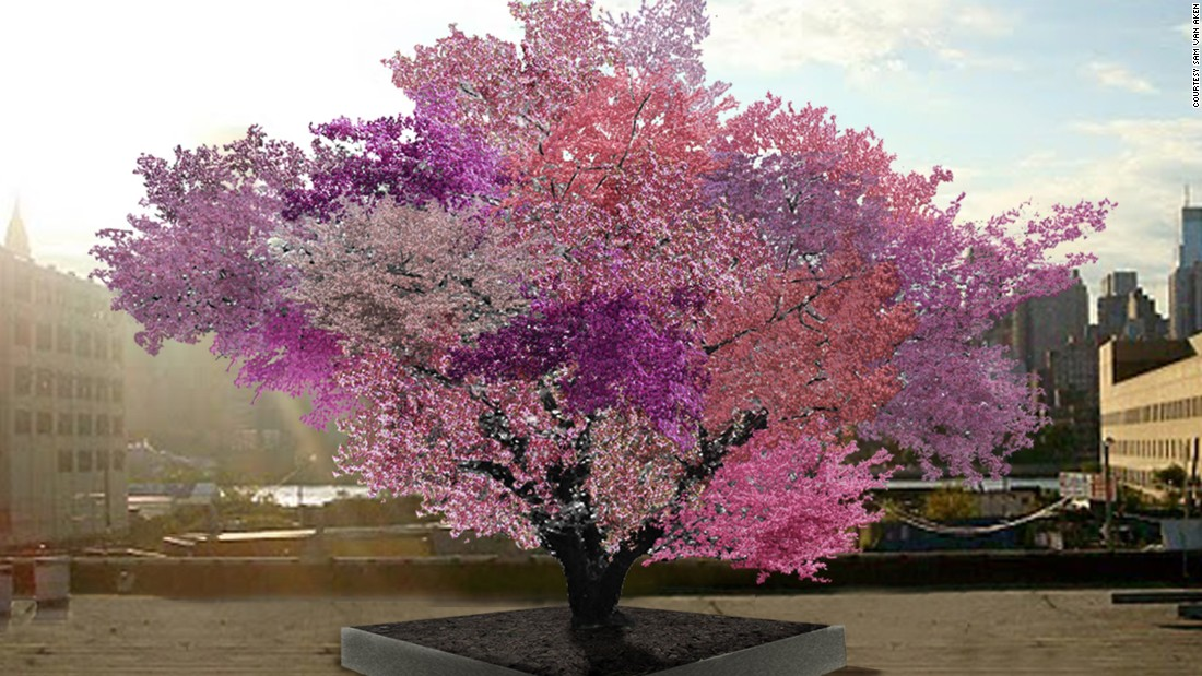 Sam Van Aken created the Tree of 40 Fruit by grafting buds from various stone fruit trees onto the branches of a single tree, making it capable of producing multiple types of fruit. This is an artist rendering of what a 10-year-old tree would look like in full bloom. Click through to find out more.