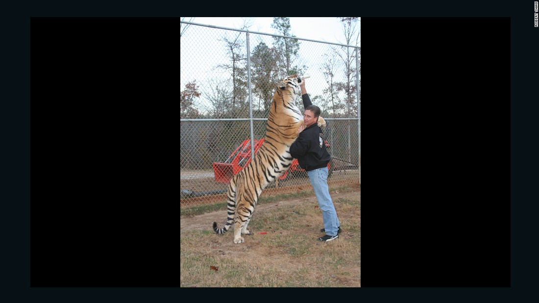 "Before entering a tiger cage, you have to greet the tiger, or ""chuff"" -- the sound, explains Gress, that tigers make when they come across each other in the wild. ""You don't turn your back, you move in a circular motion in a corner of the pen. If they're startled, then that means when you go inside, you're probably not going to have a good experience,"" he laughs."