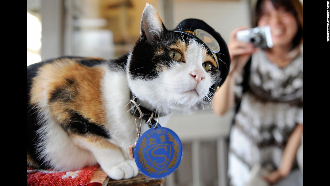 "Tama, a Japanese cat, became celebrated as the friendly stationmaster of the Kishi rail station in Kinokawa -- part of a railway line that she helped save from shutting down, thanks to her popularity, which brought in millions of dollars. Tama died June 22. She was 16. Her funeral <a href=""http://www.theguardian.com/world/2015/jun/29/tama-the-cat-3000-attend-elaborate-funeral-for-japans-feline-stationmaster"" target=""_blank"">was attended by 3,000 people</a>."